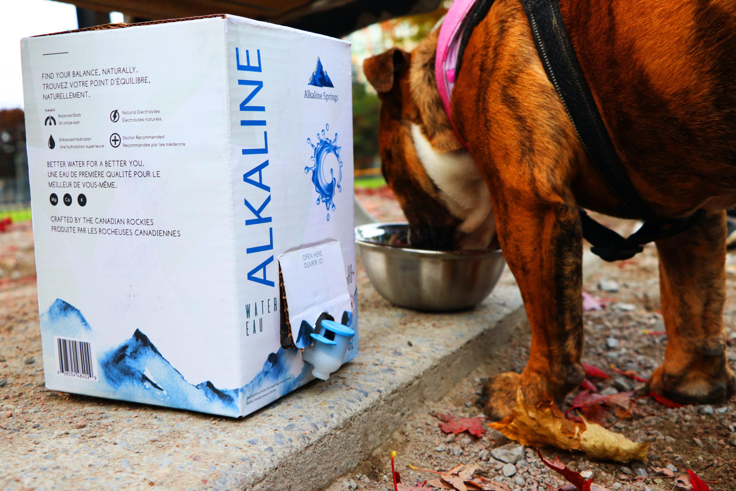 Alkaline Springs Bag-In-Box pets